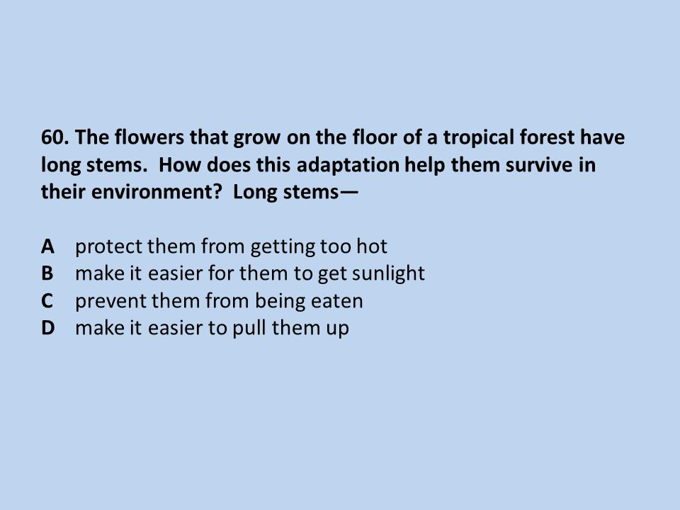 60. The flowers that grow on the floor of a tropical forest have long stems.