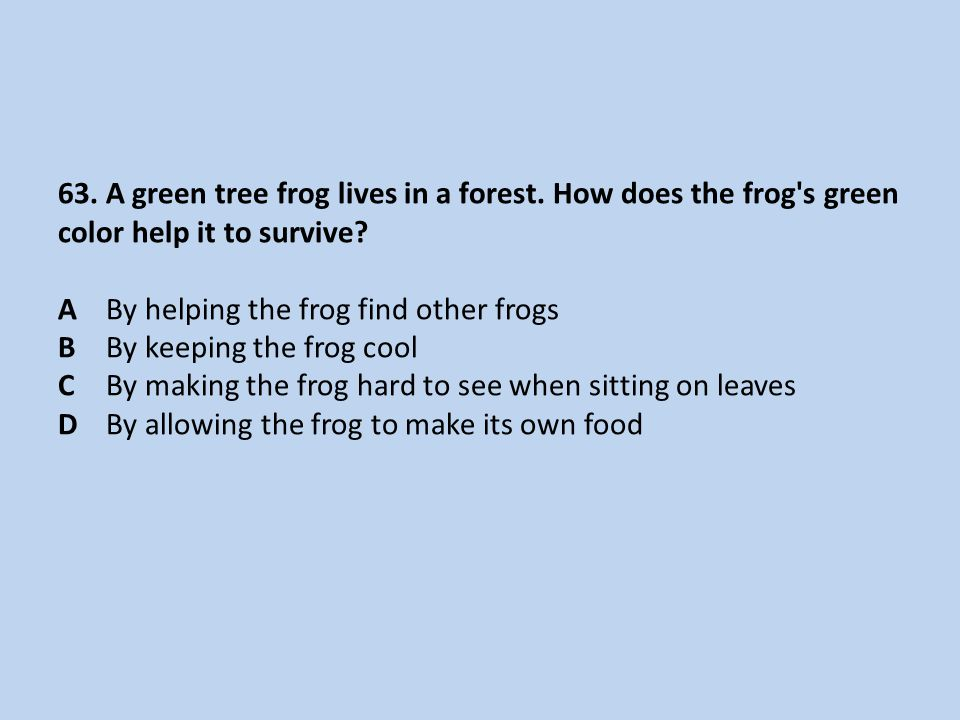 63. A green tree frog lives in a forest