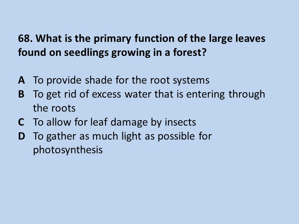 68. What is the primary function of the large leaves found on seedlings growing in a forest.