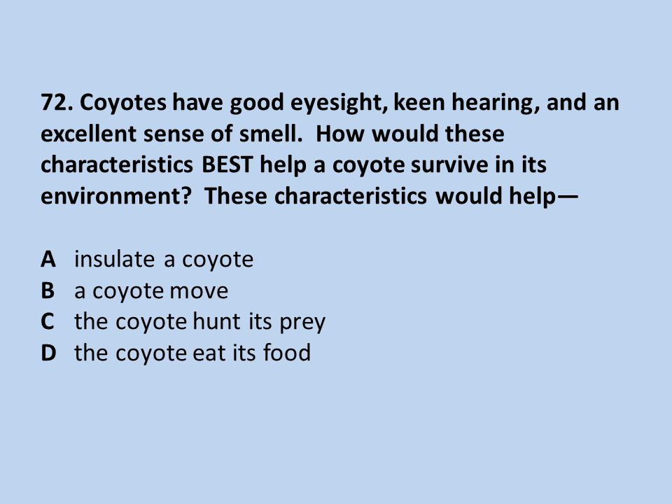 72. Coyotes have good eyesight, keen hearing, and an excellent sense of smell.