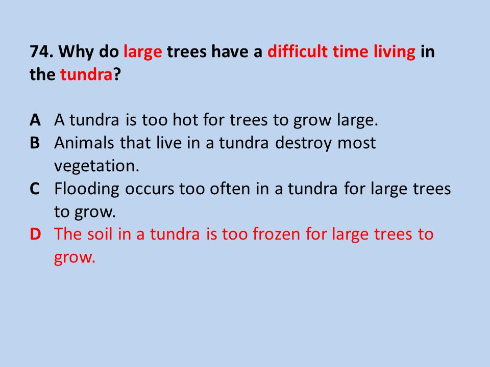74. Why do large trees have a difficult time living in the tundra. A
