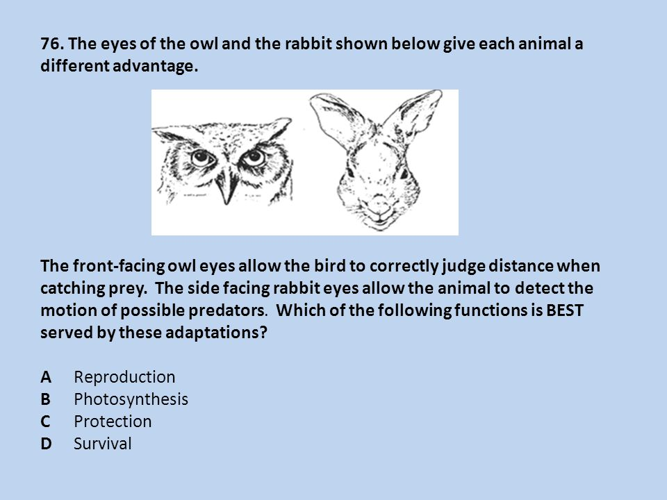 76. The eyes of the owl and the rabbit shown below give each animal a different advantage.