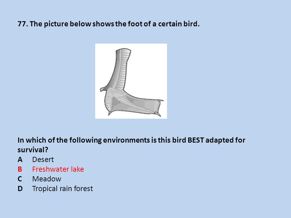 77. The picture below shows the foot of a certain bird