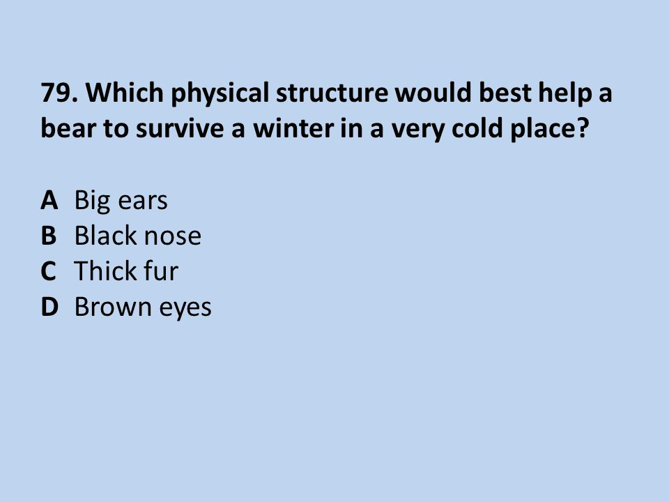 79. Which physical structure would best help a bear to survive a winter in a very cold place.