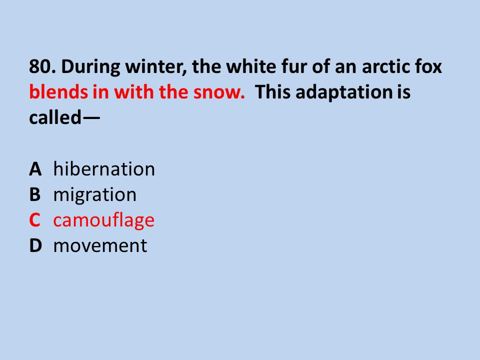 80. During winter, the white fur of an arctic fox blends in with the snow.