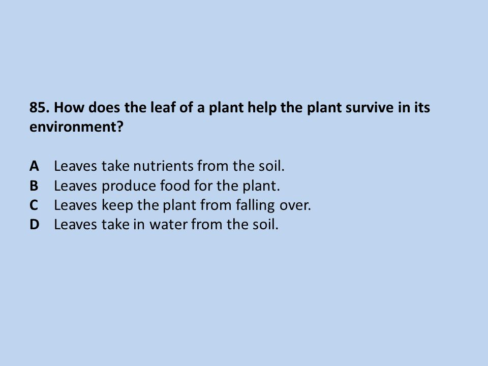 85. How does the leaf of a plant help the plant survive in its environment.