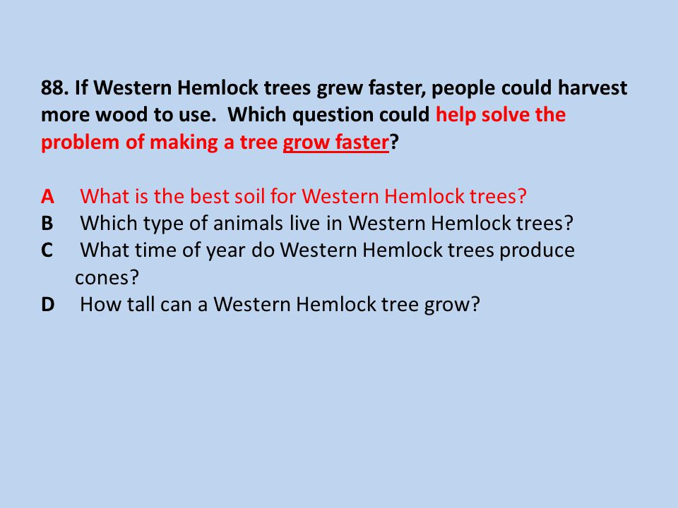 88. If Western Hemlock trees grew faster, people could harvest more wood to use.