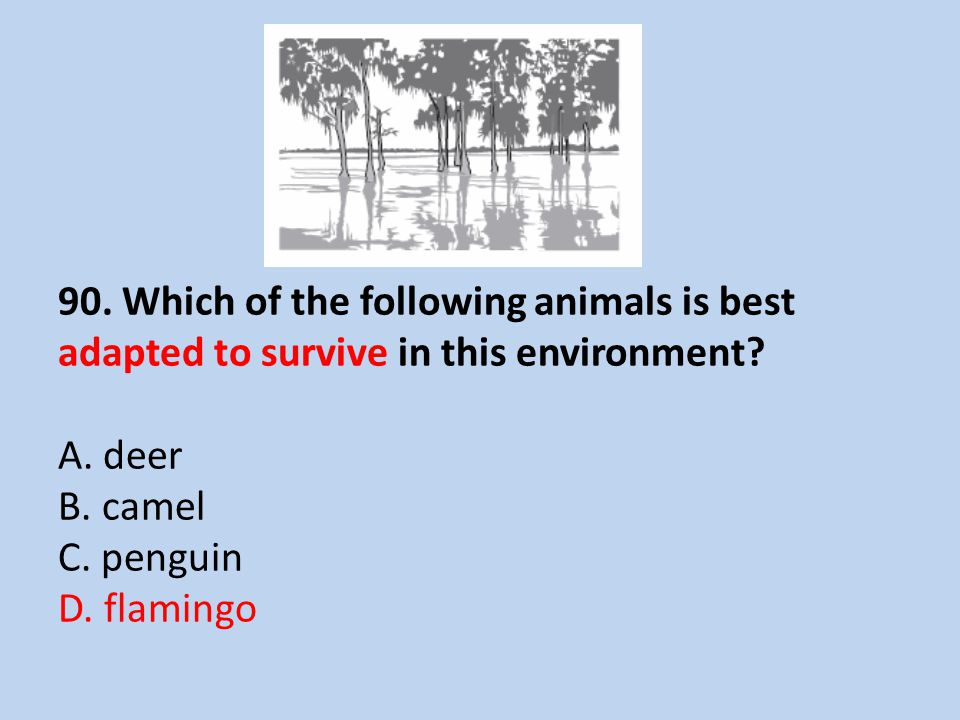 90. Which of the following animals is best adapted to survive in this environment.