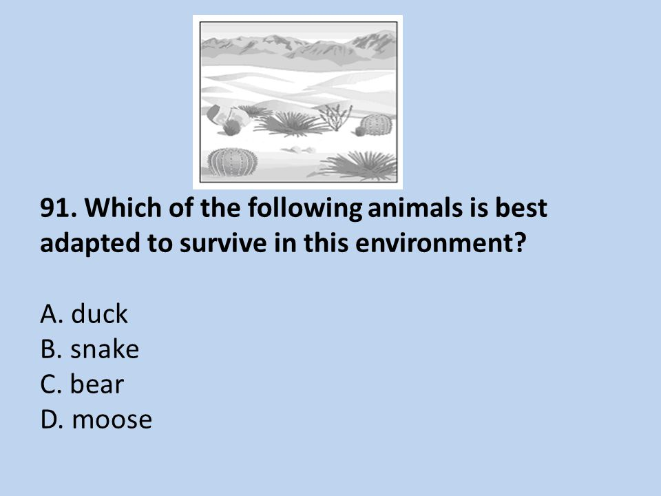 91. Which of the following animals is best adapted to survive in this environment.