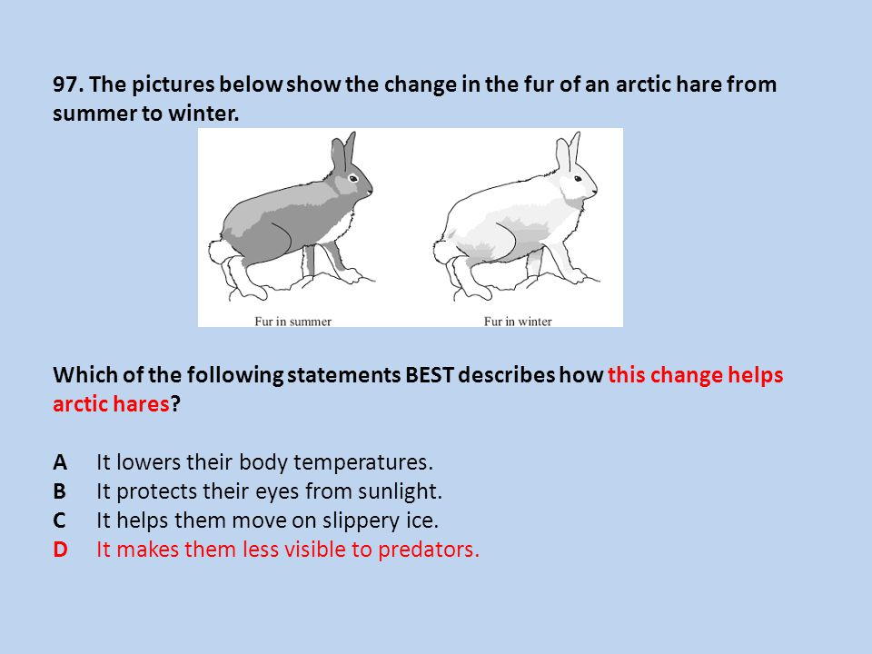 97. The pictures below show the change in the fur of an arctic hare from summer to winter.