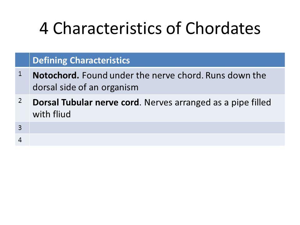 4 Characteristics of Chordates