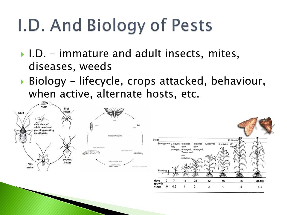 I.D. And Biology of Pests I.D. – immature and adult insects, mites, diseases, weeds.