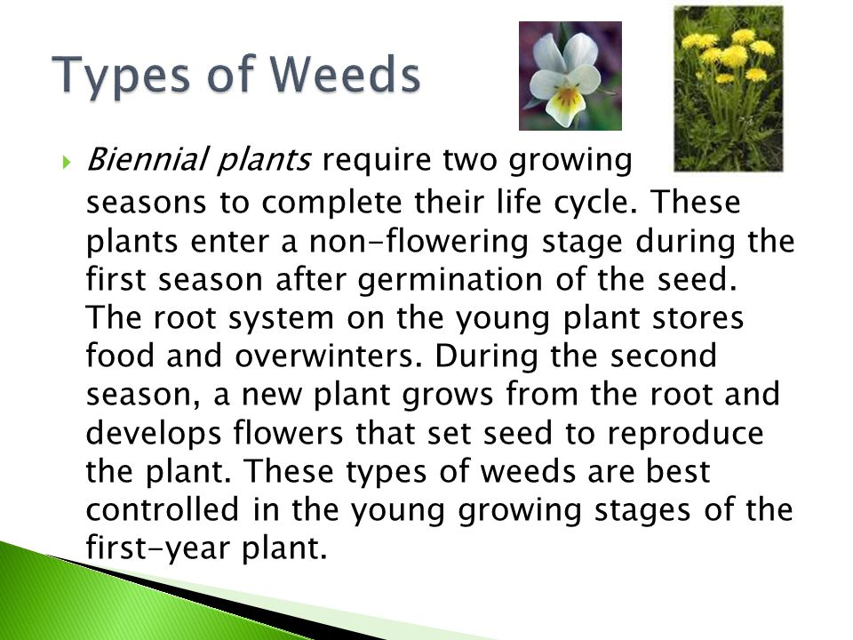 Types of Weeds Biennial plants require two growing