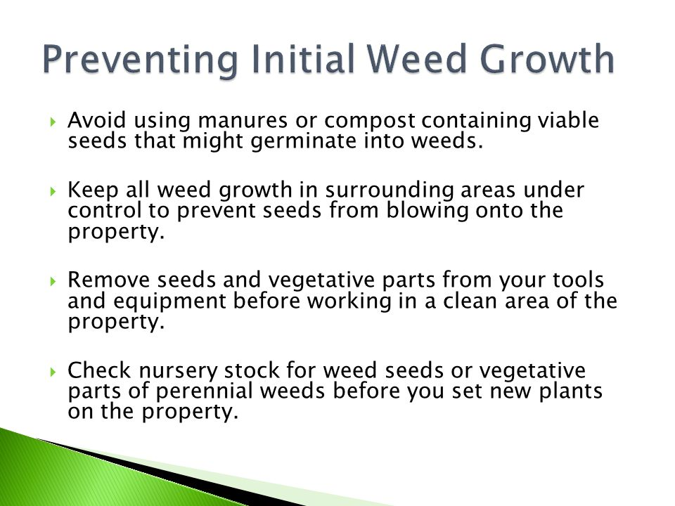 Preventing Initial Weed Growth