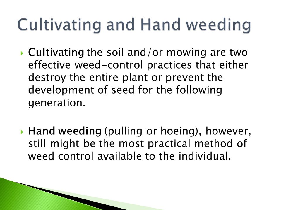 Cultivating and Hand weeding