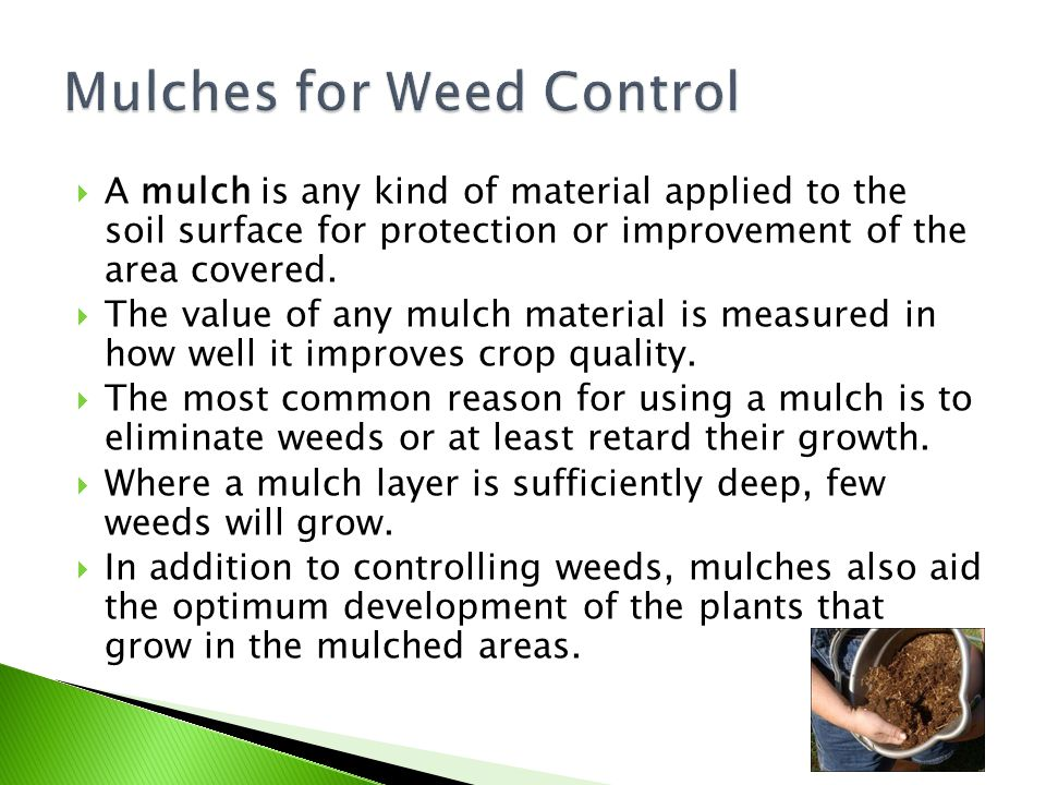 Mulches for Weed Control