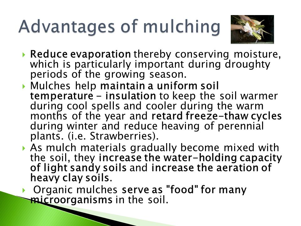 Advantages of mulching