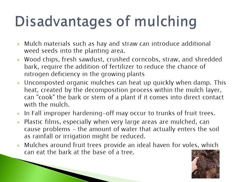 Disadvantages of mulching