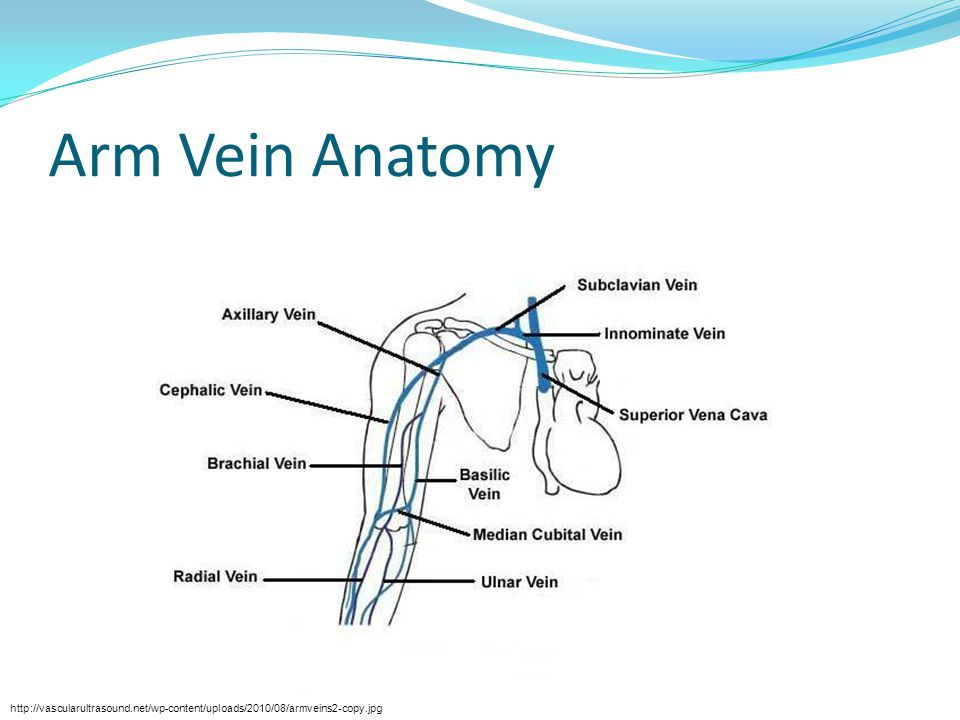 Arm Vein Anatomy http://vascularultrasound.net/wp-content/uploads/2010/08/armveins2-copy.jpg