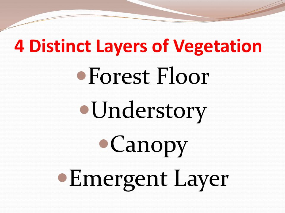 4 Distinct Layers of Vegetation