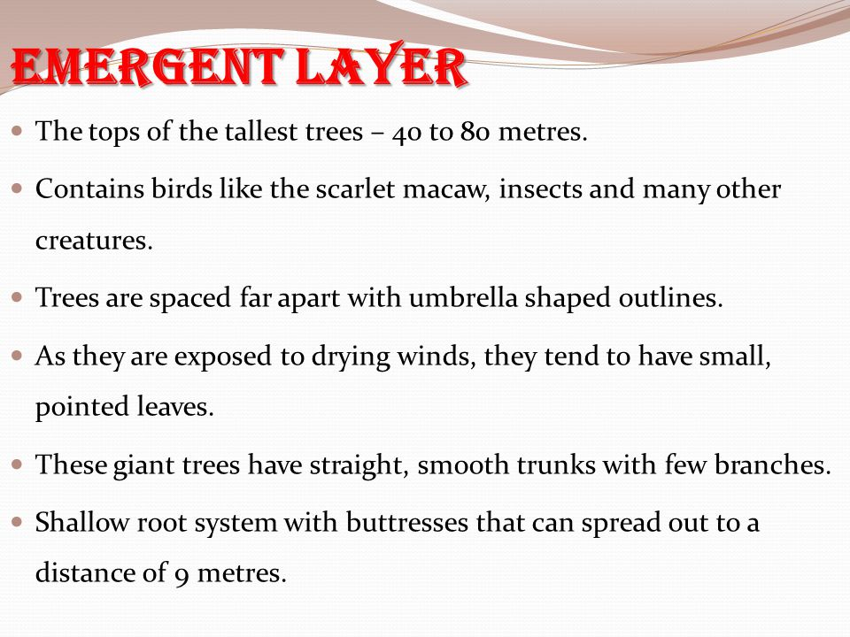 Emergent Layer The tops of the tallest trees – 40 to 80 metres.