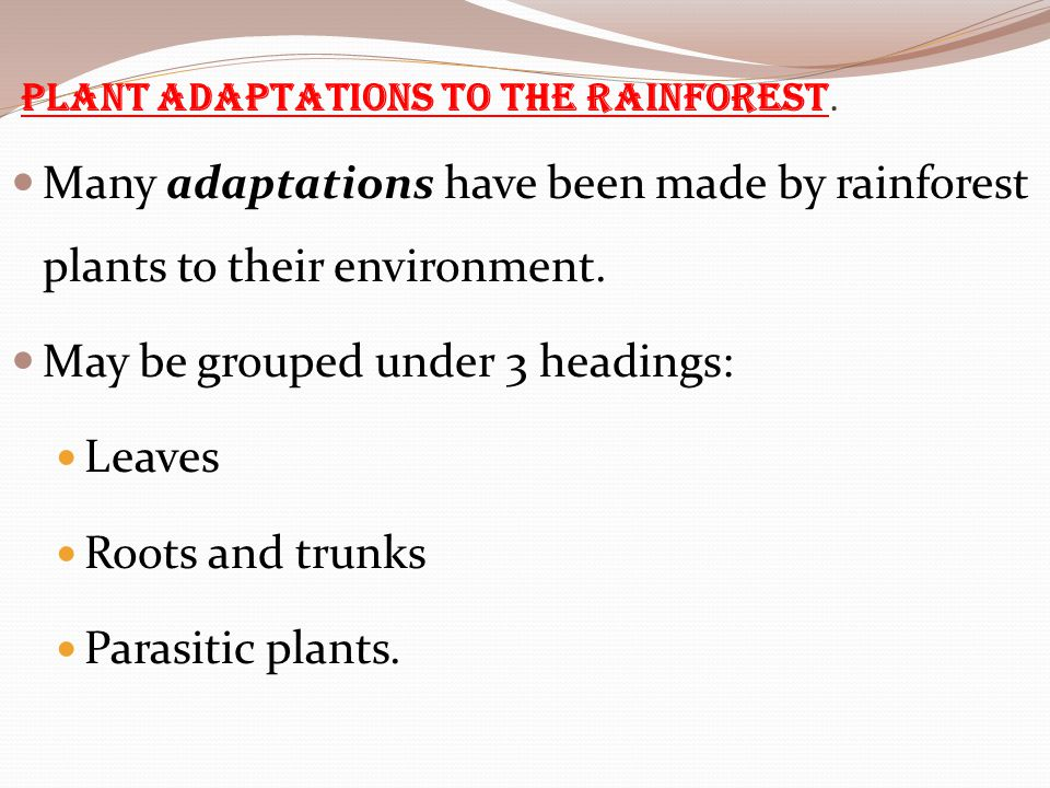 Plant adaptations to the rainforest.