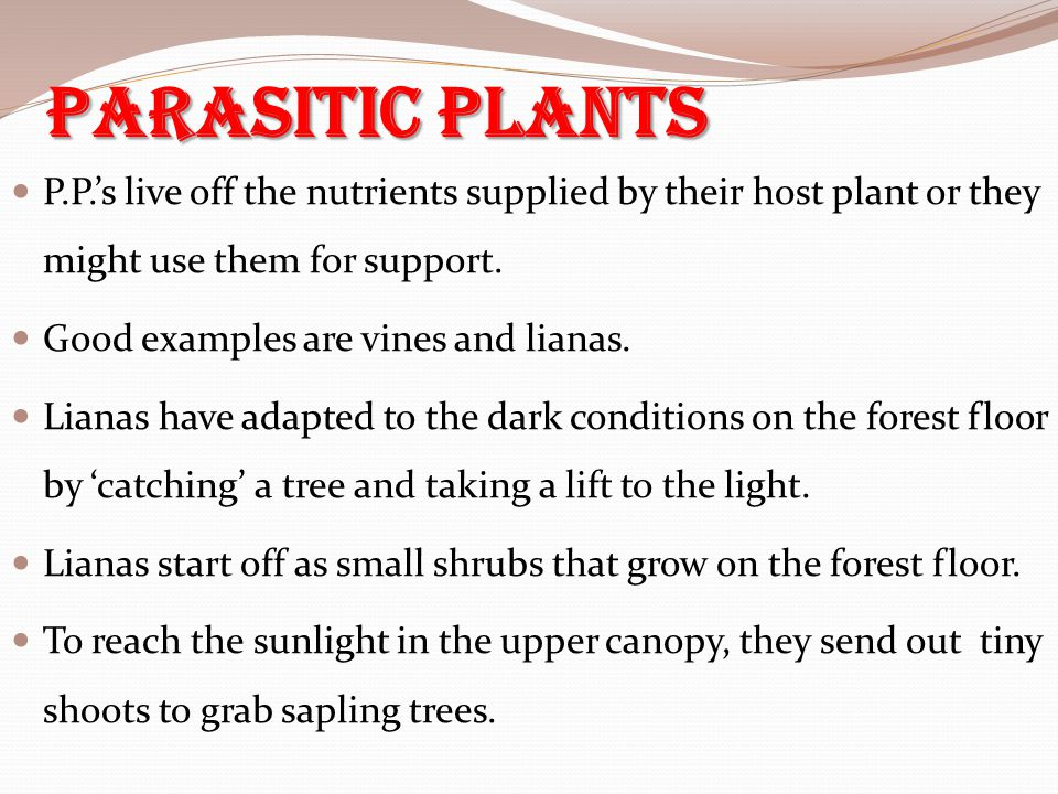 Parasitic Plants P.P.'s live off the nutrients supplied by their host plant or they might use them for support.