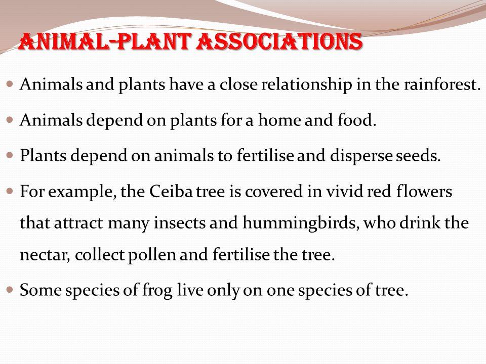 Animal-Plant Associations