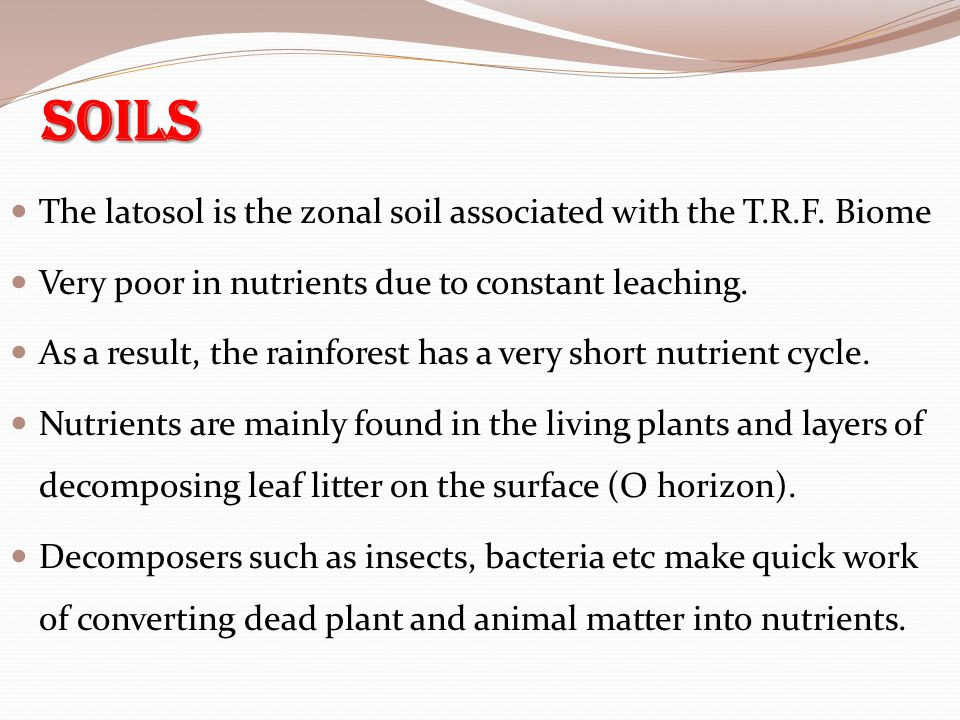 Soils The latosol is the zonal soil associated with the T.R.F. Biome