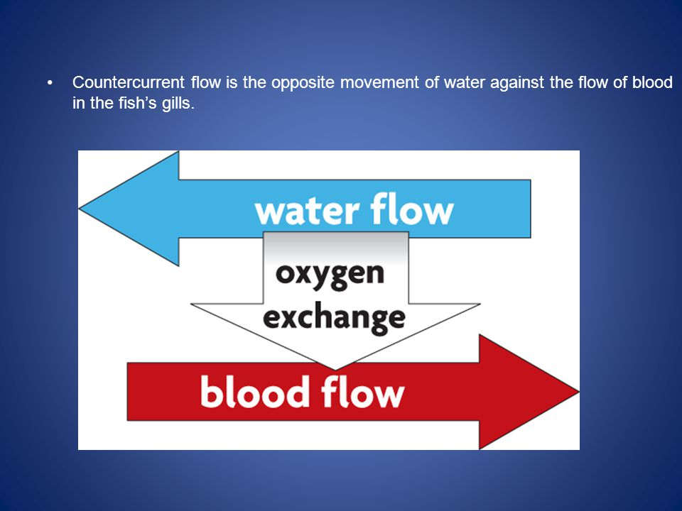 Countercurrent flow is the opposite movement of water against the flow of blood in the fish's gills.