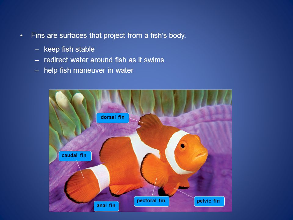 Fins are surfaces that project from a fish's body.