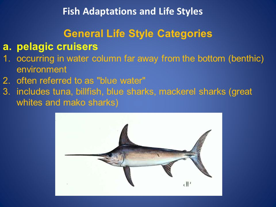 General Life Style Categories