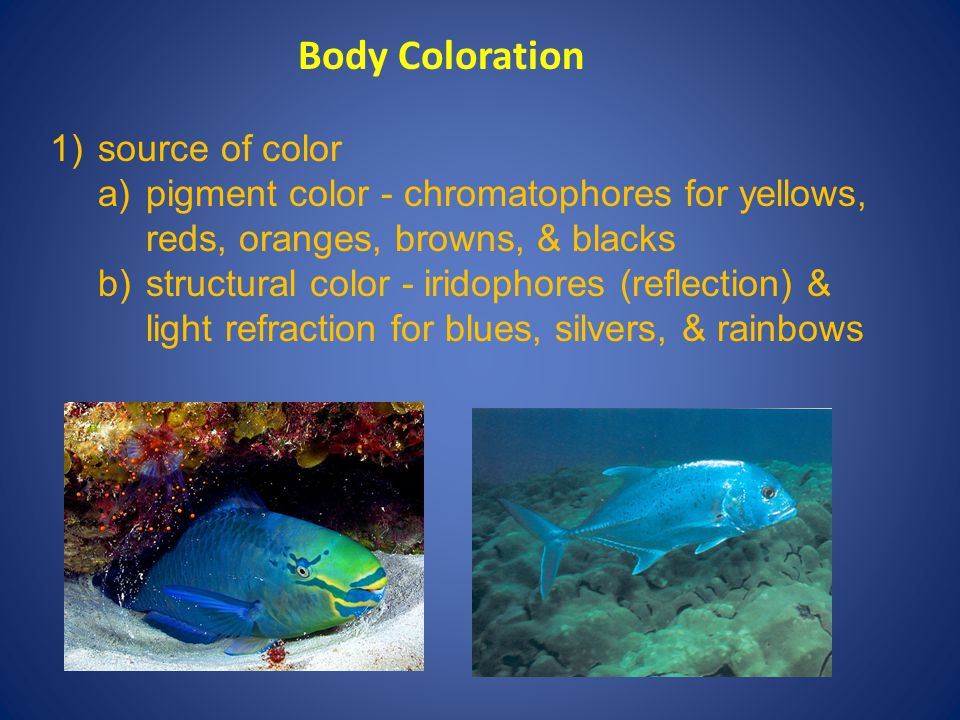 Body Coloration 1) source of color