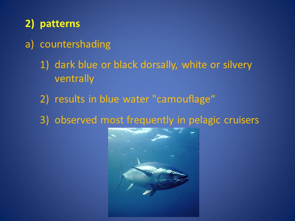 2) patterns a) countershading. dark blue or black dorsally, white or silvery ventrally. results in blue water camouflage