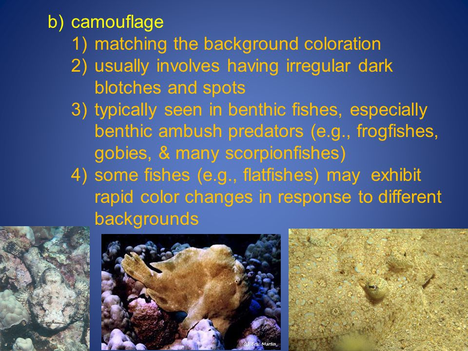 b) camouflage matching the background coloration. usually involves having irregular dark blotches and spots.