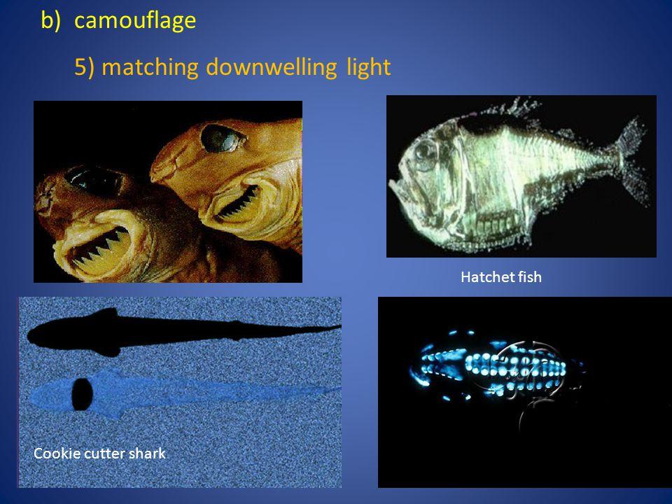 5) matching downwelling light
