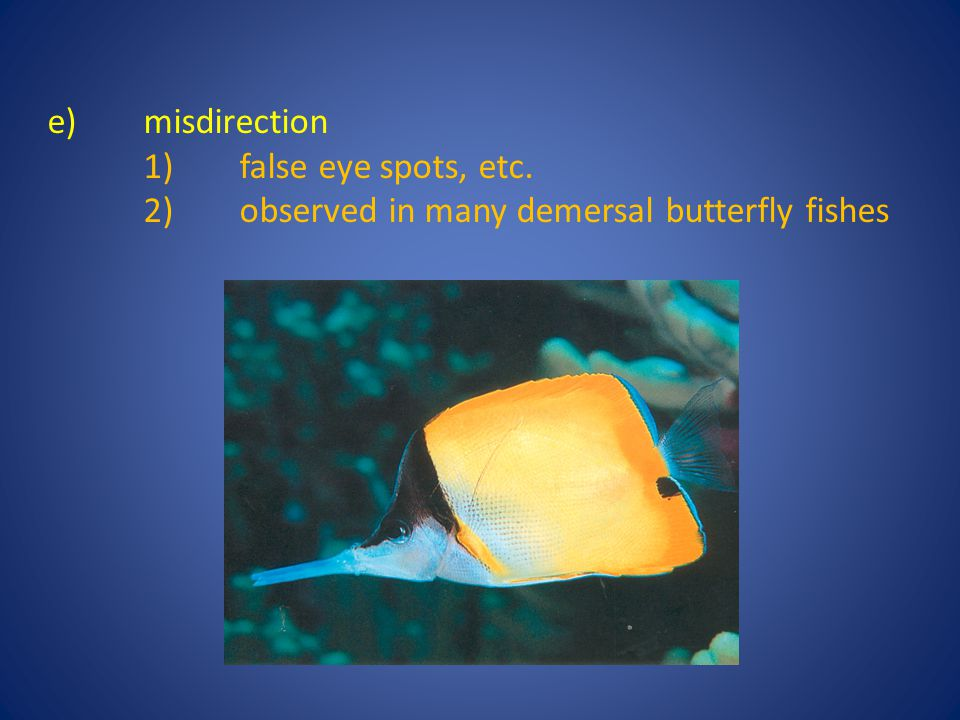e) misdirection 1) false eye spots, etc. 2) observed in many demersal butterfly fishes