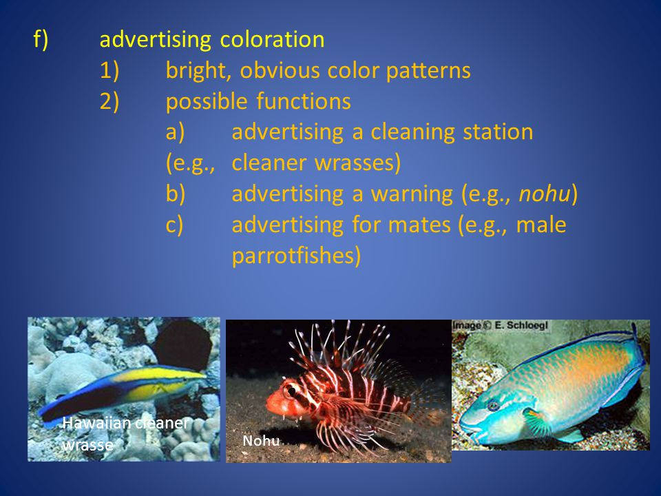 f) advertising coloration 1) bright, obvious color patterns