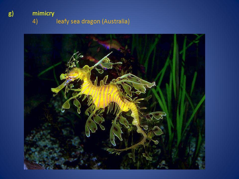 g) mimicry 4) leafy sea dragon (Australia)