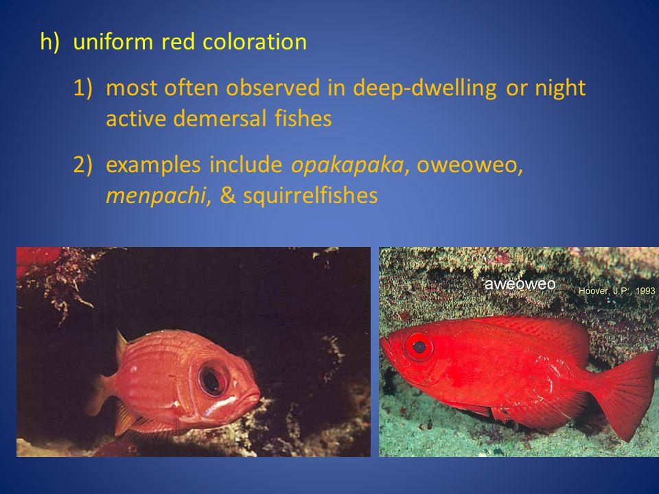 h) uniform red coloration