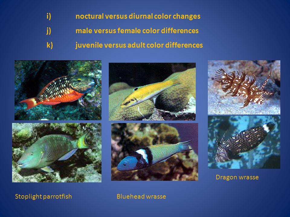 i) noctural versus diurnal color changes