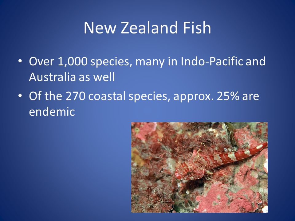 New Zealand Fish Over 1,000 species, many in Indo-Pacific and Australia as well.