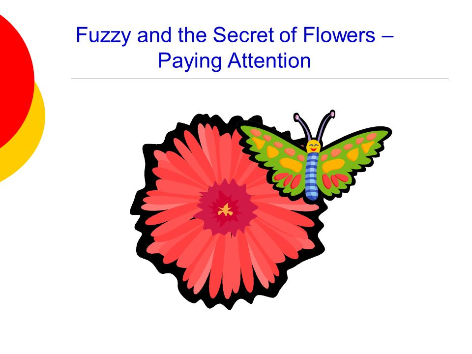 Fuzzy and the Secret of Flowers – Paying Attention
