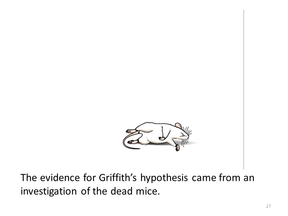 The evidence for Griffith's hypothesis came from an investigation of the dead mice.