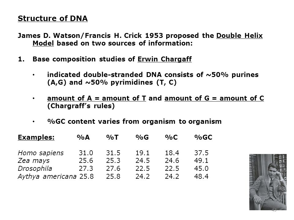Structure of DNA James D. Watson/Francis H. Crick 1953 proposed the Double Helix Model based on two sources of information: