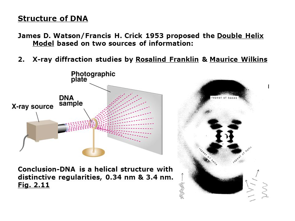 Chapter 2 - DNA: The Genetic Material - ppt video online ...