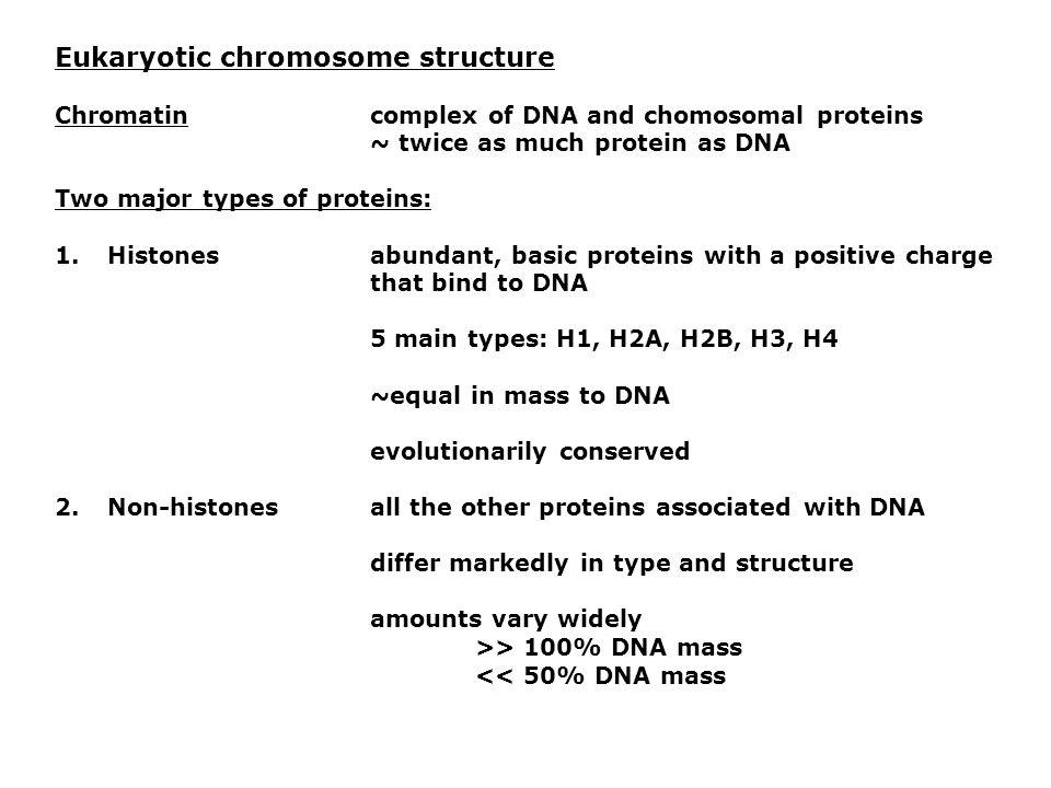 Eukaryotic chromosome structure