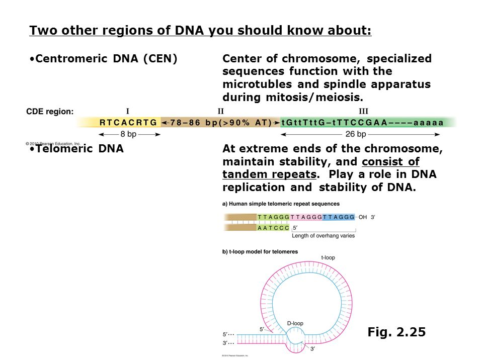 Two other regions of DNA you should know about: