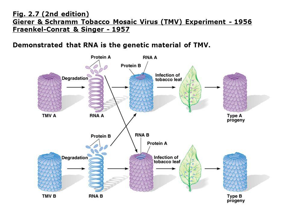Gierer & Schramm Tobacco Mosaic Virus (TMV) Experiment - 1956