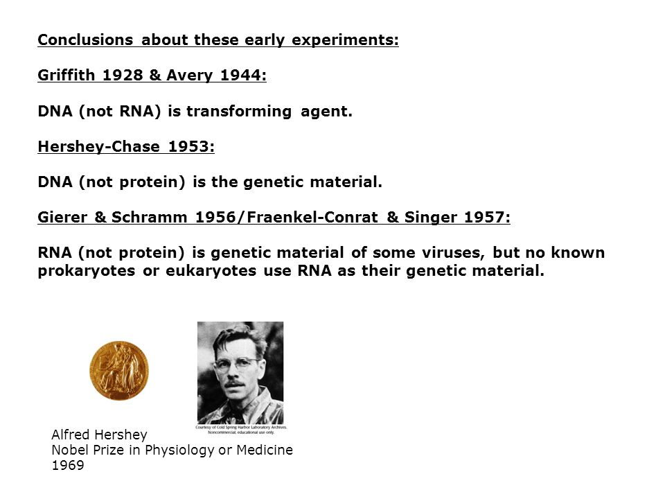 Conclusions about these early experiments: Griffith 1928 & Avery 1944: